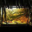 24_acuario_biotopobarco_lo_peix