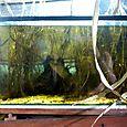 20_acuario_biotopojpgrd