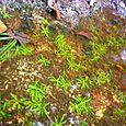 11_plantas_palustres_rio_negrojpg_rd