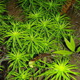 Planta subacuatica
