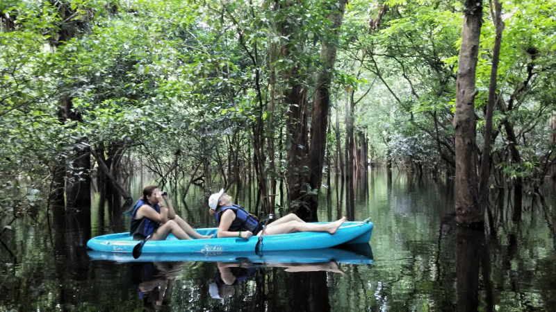 Observando orquideas en el bosque inundado