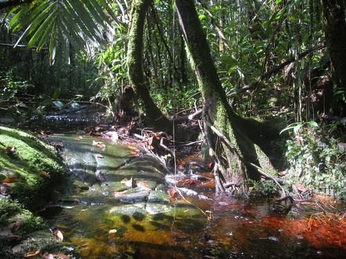 12_afluente_del_rio_negro_1